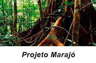 Projeto Marajó